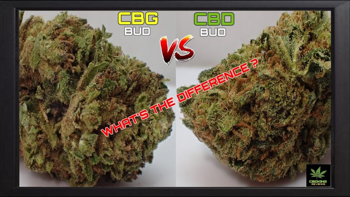 CBG BUD VS CBD BUD| WHAT'S THE DIFFERENCE?